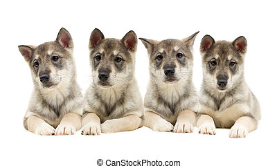 satz, von, hundebabys, aussehen