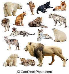 satz, von, räuberisch, animals., freigestellt, aus, weißes