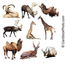 satz, von, säugetier, tiere, aus, weißer hintergrund, mit, schatten