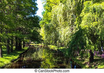 sauce, y, río, en el parque