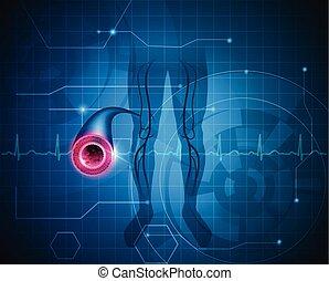 saudável, artéria, fundo, perna