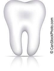 saudável, branca, ilustração, dente