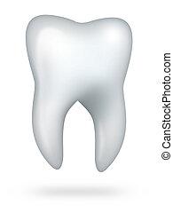 saudável, molar, dente, isolado, branco, fundo
