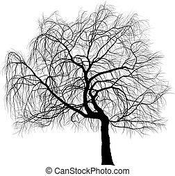saule, larmes, arbre