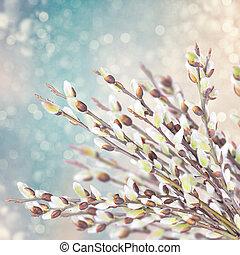 saule, printemps, fleurir, branches