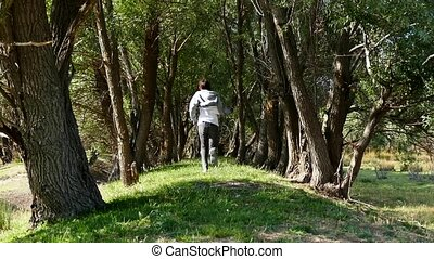 saule, sentier, courant, entre, homme, forêt, arbres