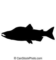 saumon, silhouette
