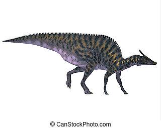 Saurolophus on White