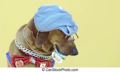 Portrait of funny dog with clothes, hat and pacifier, eyeglasses and hat