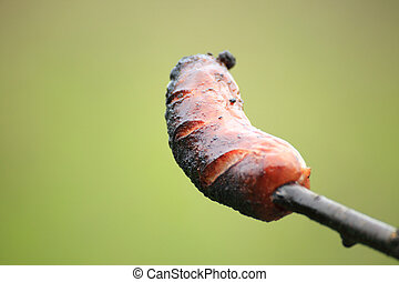 Sausage prick green background nature barbecue
