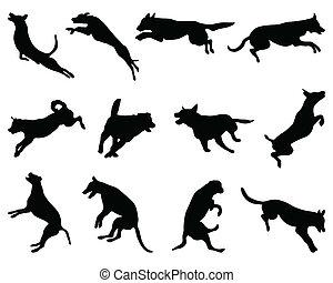 sauter, chiens