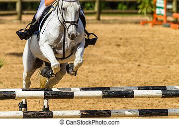 sauter, closeup, résumé, polonais, cavalier cheval