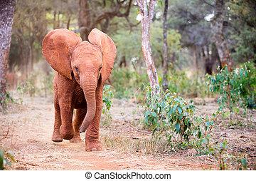 sauvage, afrique, éléphant