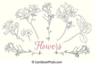 sauvage, backgrounds., monochrome, illustrations., rose, croquis, vecteur, dessin, line-art, fleurs blanches