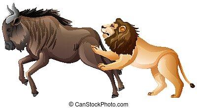 sauvage, blanc, lion, chasse, fond, buffle