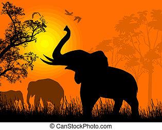 sauvage, coucher soleil, éléphants
