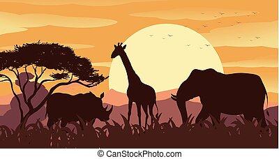 sauvage, coucher soleil, silhouette, animaux, scène