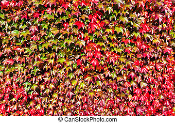 sauvage, feuilles, vin
