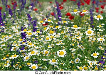 sauvage, fleurs ressort, pré, saison