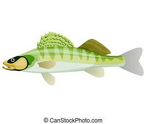 sauvage, grand poisson