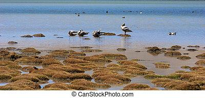 sauvage, lakeside, oiseaux