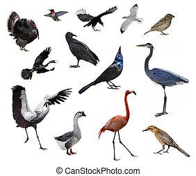 sauvage, oiseaux
