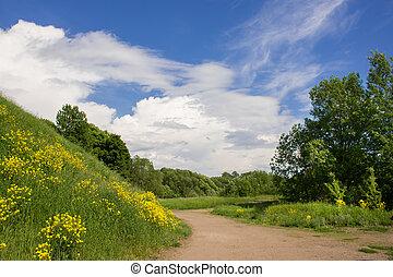 sauvage, panorama, herbs., été