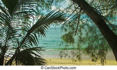 sauvage, par, vue, arbres, plage.