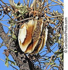 sauvage, pecan, arbre, abeille ruche