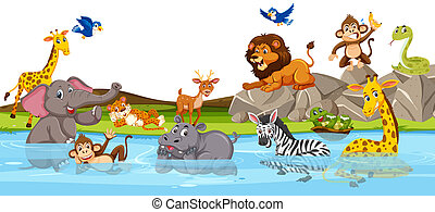 sauvage, rivière, animal