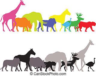 sauvage, silhouette, animal