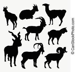 sauvage, silhouette, lama, animal, chèvre