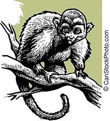 sauvage, singe, dans noir, et, blanc