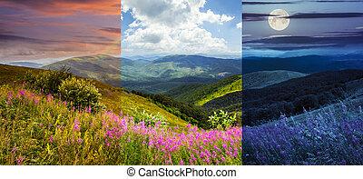 sauvage, sommet montagne, fleurs