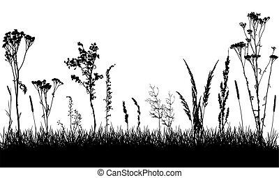sauvage, usines, field., grass., mauvaises herbes, séparé, vecteur, illustration., herbe, silhouettes