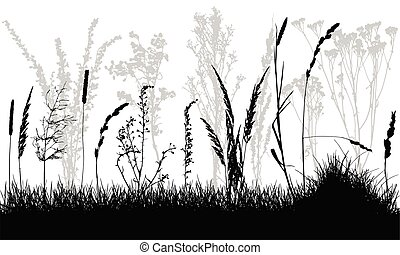 sauvage, weeds., vecteur, illustration., herbe, silhouettes