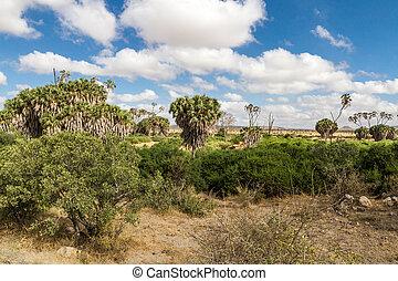 Savana landscape in Africa. Tsavo West, Kenya.