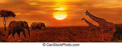 savane, éléphants, africaine, girafes