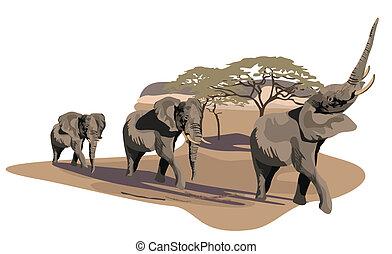 savane, éléphants