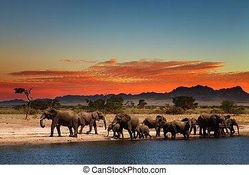 savane, africaine, troupeau, éléphants