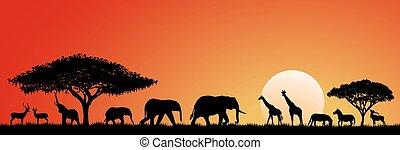 savane, animaux