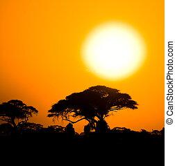 savane, coucher soleil, africaine