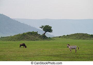 savane, ngorongoro, paysage