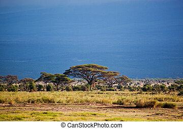 savane, paysage, dans, afrique, amboseli, kenya