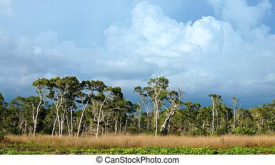 savann, grässlättar, trang, thailand.