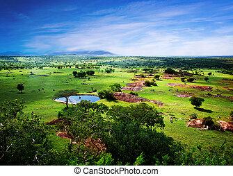 savanna, blomstring, ind, tanzania, afrika, panorama
