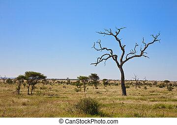 Savanna bushveld in South Africa - Savanna bushveld scene...