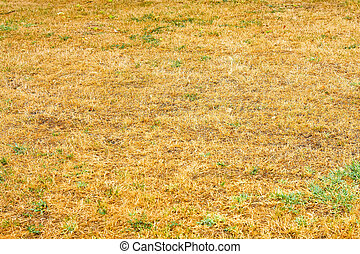 Conceptual shot of drought savanna style grass