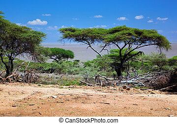 Savanna landscape in Africa, Serengeti, Tanzania - Savanna...