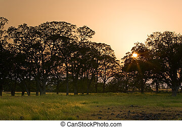 Savanna sunset over meadow and trees